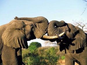 Язык общения животных