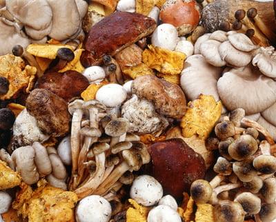 Пищевая ценность грибов