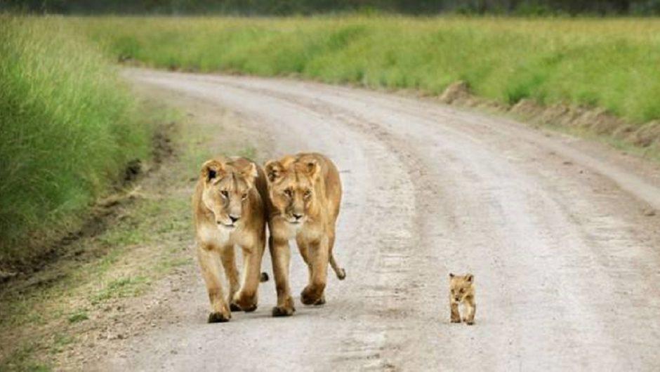 О детях и родительской любви